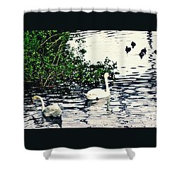 Shower Curtain featuring the photograph Swan Family On The Rhine 2 by Sarah Loft