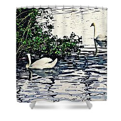 Shower Curtain featuring the photograph Swan Family On The Rhine 3 by Sarah Loft