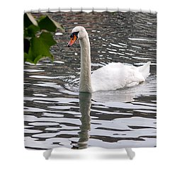 Swan Framed By Maple Leaves Shower Curtain
