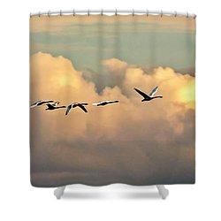 Swan Heaven Shower Curtain