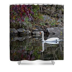 Swan In Autumn Reflections Shower Curtain