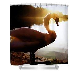 Swan In Evening Sun Shower Curtain