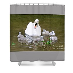 Swan Lake 1 Shower Curtain by Bill Holkham