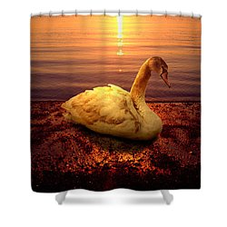 Swan Lake Shower Curtain by Yuri Lev