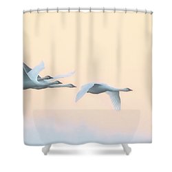 Shower Curtain featuring the photograph Swan Migration  by Kelly Marquardt