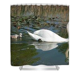 Swan Scenic Shower Curtain