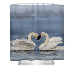 Swan Valentine - Blue Shower Curtain