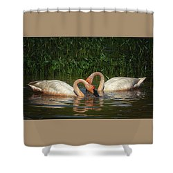 Swans In A Pond  Shower Curtain