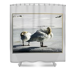 Swans On Ice Shower Curtain