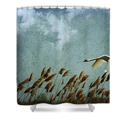 Swans Rule The Marshlands Shower Curtain