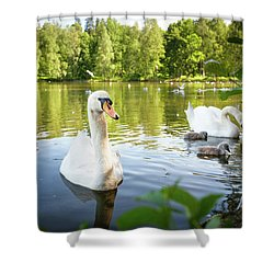 Swans With Chicks Shower Curtain