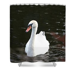 Swans-a-swimming Shower Curtain