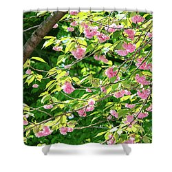 Sweeping Cherry Blossom Branches Shower Curtain