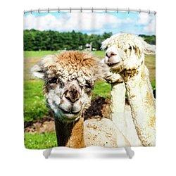 The Soft Joy Of Apacas Shower Curtain