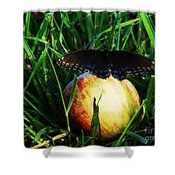 Shower Curtain featuring the photograph Sweet Beauty  by J L Zarek