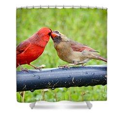 Sweet Cardinal Couple Shower Curtain by Kerri Farley
