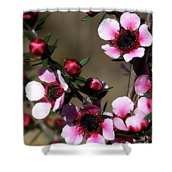 Sweet Cherry Shower Curtain by Baggieoldboy