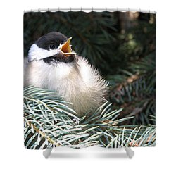 Sweet Chickadee Shower Curtain by Angie Rea