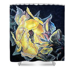 Sweet Desert Rose   Pastel Shower Curtain
