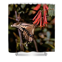 Sweet Feed Shower Curtain