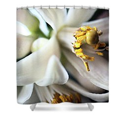 Sweet Fragrance 2 Shower Curtain