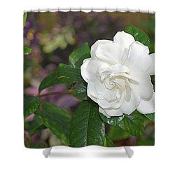 Sweet Gardenia Shower Curtain