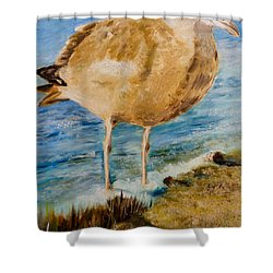 Sweet Gull Chick Shower Curtain
