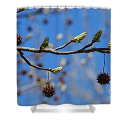Sweet Gum Catkins 20120405_206a Shower Curtain