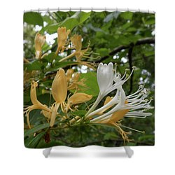 Sweet Honeysuckle Shrub Shower Curtain