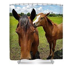 Sweet Horses  Shower Curtain
