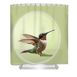 Sweet Little Hummingbird Shower Curtain by Bonnie Barry