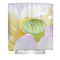 Sweet Lotus Shower Curtain