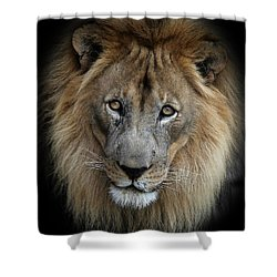 Sweet Male Lion Shower Curtain