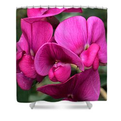 Sweet Peas Shower Curtain by Karen Molenaar Terrell