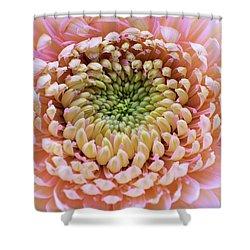 Sweet Pink Gerber Shower Curtain