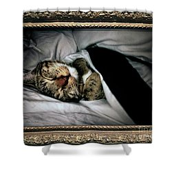 Shower Curtain featuring the photograph Sweet Simba Photo A8117 by Mas Art Studio