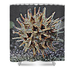 Shower Curtain featuring the photograph Sweetgum Ball by Donna G Smith