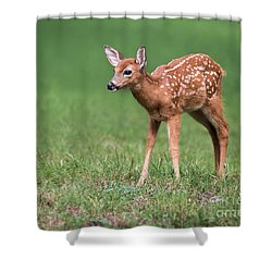 Shower Curtain featuring the photograph Sweetness by Andrea Silies