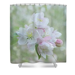 Sweetness Shower Curtain by Kim Hojnacki