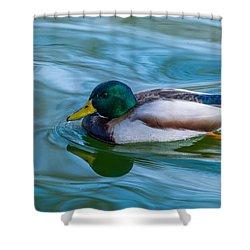 Swimming Duck Shower Curtain