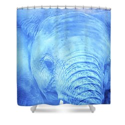 Swimming Trunks Shower Curtain by Dennis Baswell