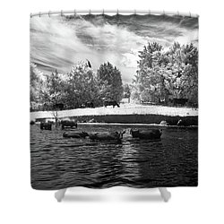 Swimming With Cows II Shower Curtain