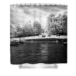Swimming With Cows Shower Curtain