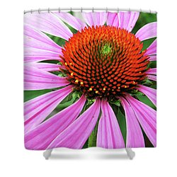 Swirling Purple Cone Flower 3576 H_2 Shower Curtain