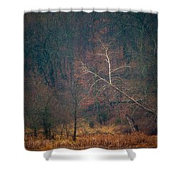 Sycamore Inclination Shower Curtain