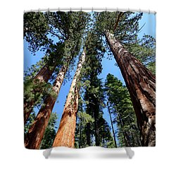 Sylvan Giants 2 Shower Curtain