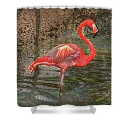 Shower Curtain featuring the photograph Symbol Of Florida by Hanny Heim