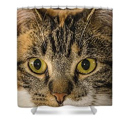 Symmetrical Cat Shower Curtain