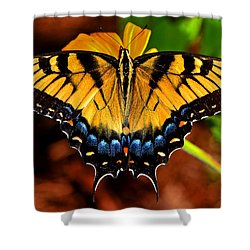 Symmetry Of A Butterfly 004 Shower Curtain