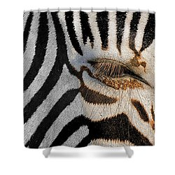 Synthetic Zebra Shower Curtain